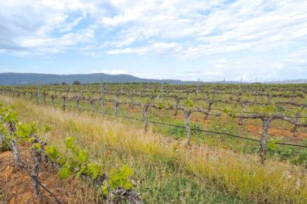 Hacia el Somontano, tierra de vinos