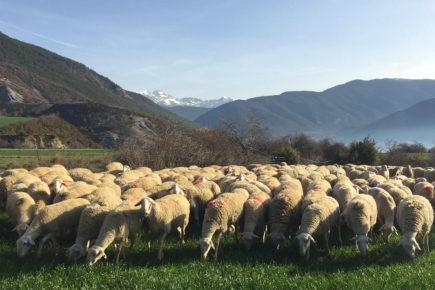 La importancia del pastoreo | Ternasco de Aragón