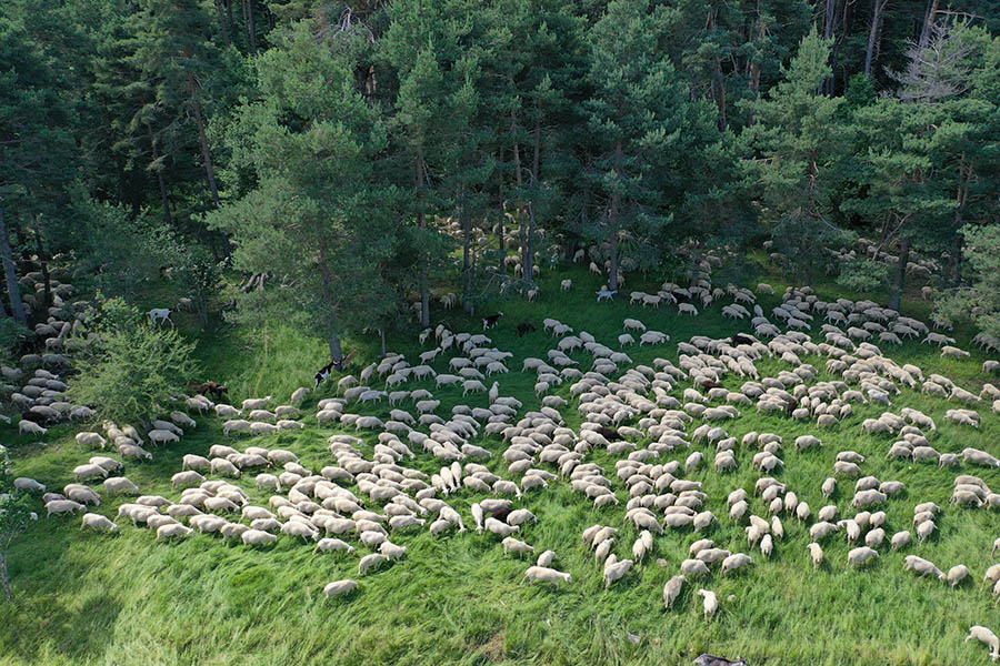 El Ternasco de Aragón es una de las carnes más sostenibles